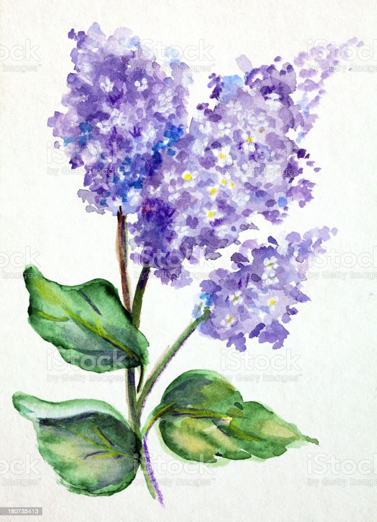 Original Art Watercolor painting of Lilacs vector art illustration