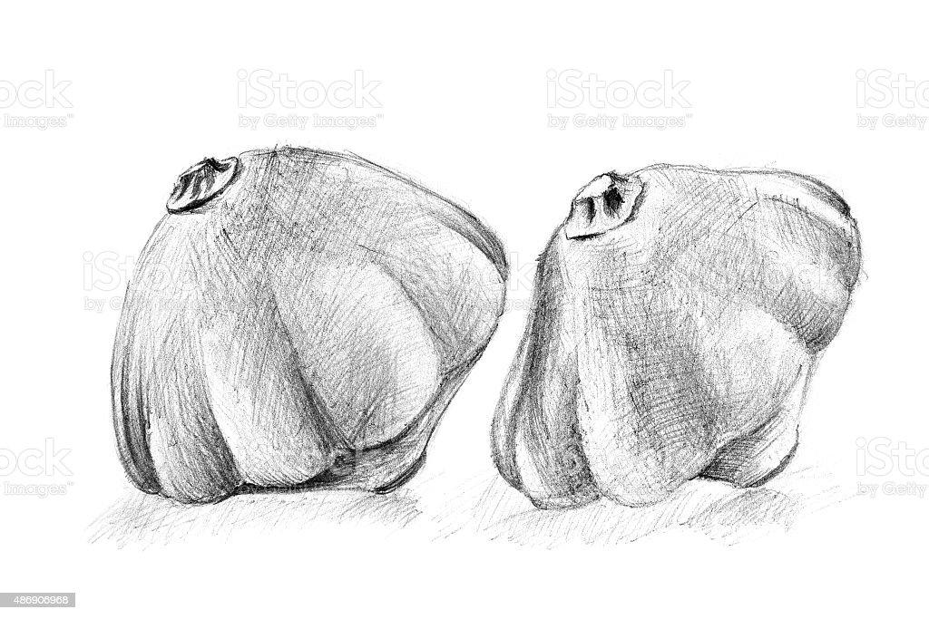 Dibujo a lápiz Original del bush calabaza. illustracion libre de derechos libre de derechos