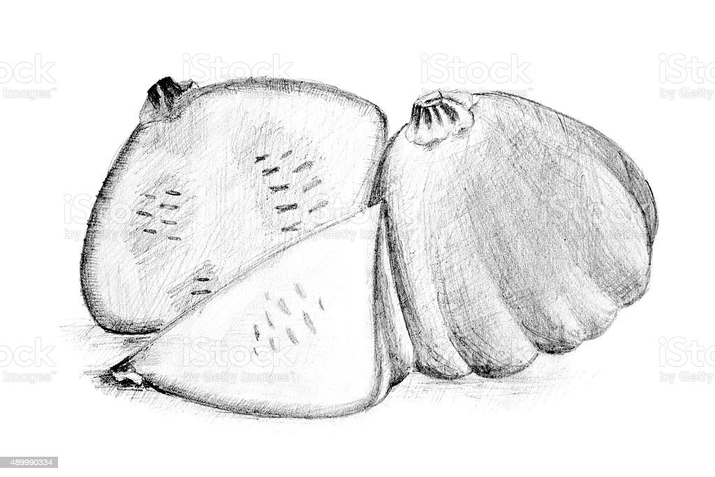 Dibujo a lápiz Original del bush calabaza o squash. illustracion libre de derechos libre de derechos