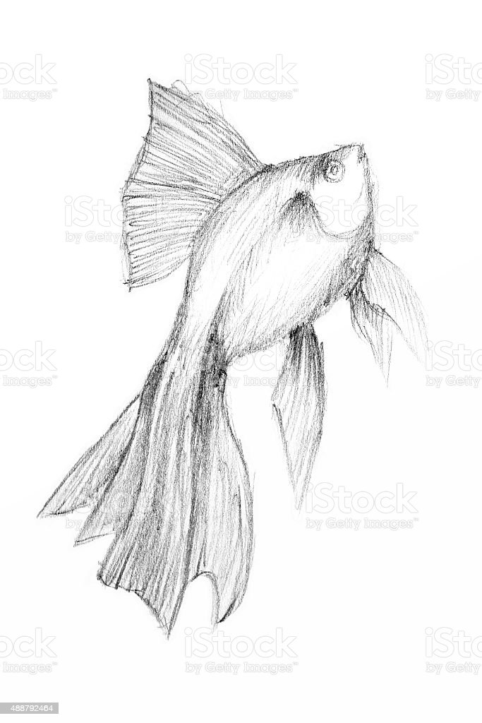 Original pencil drawing by the fish. vector art illustration