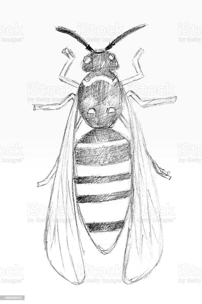 Dibujo a lápiz por el Original avispa. illustracion libre de derechos libre de derechos