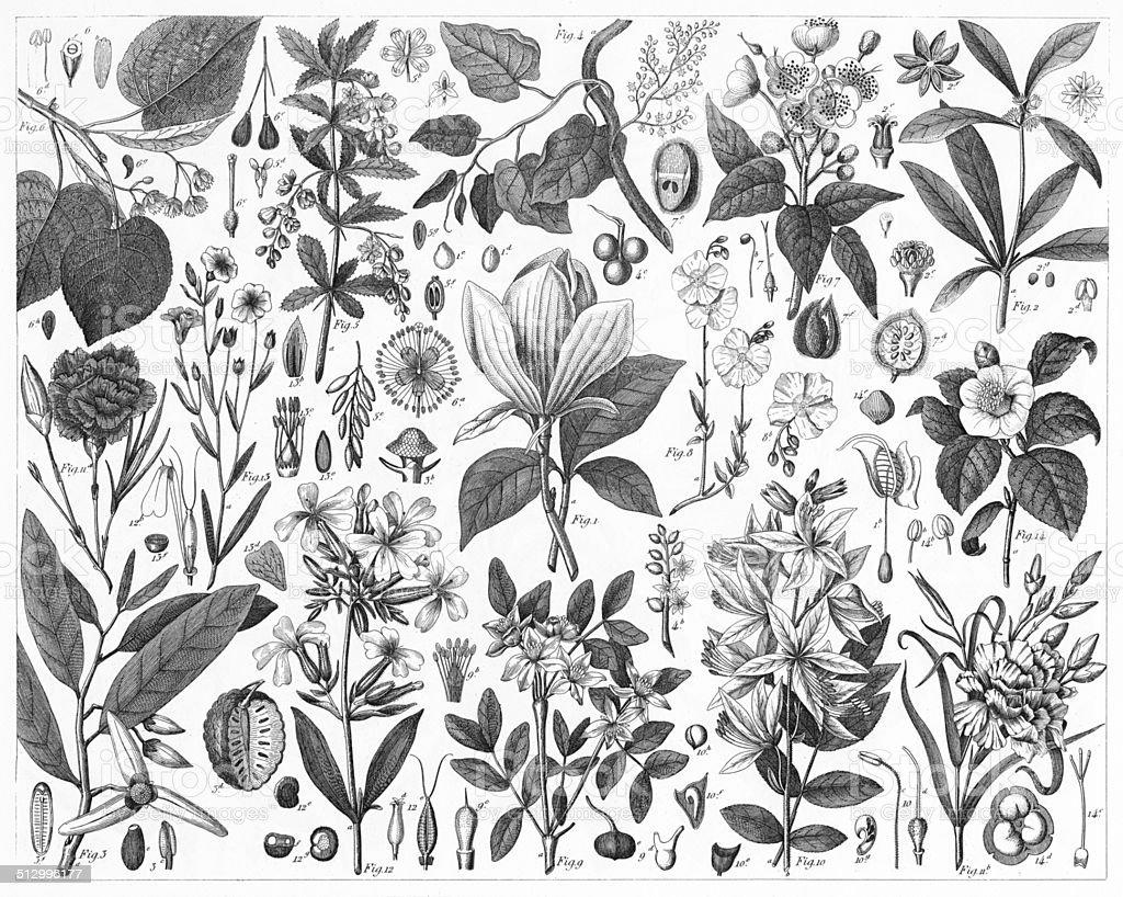 Ornamental Plants vector art illustration