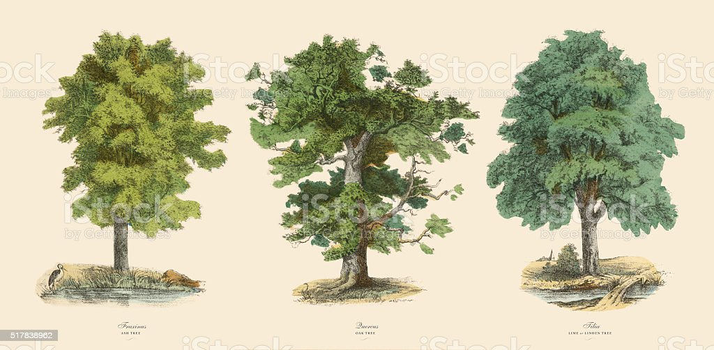 Ornamental Trees in the Forest, Victorian Botanical Illustration vector art illustration