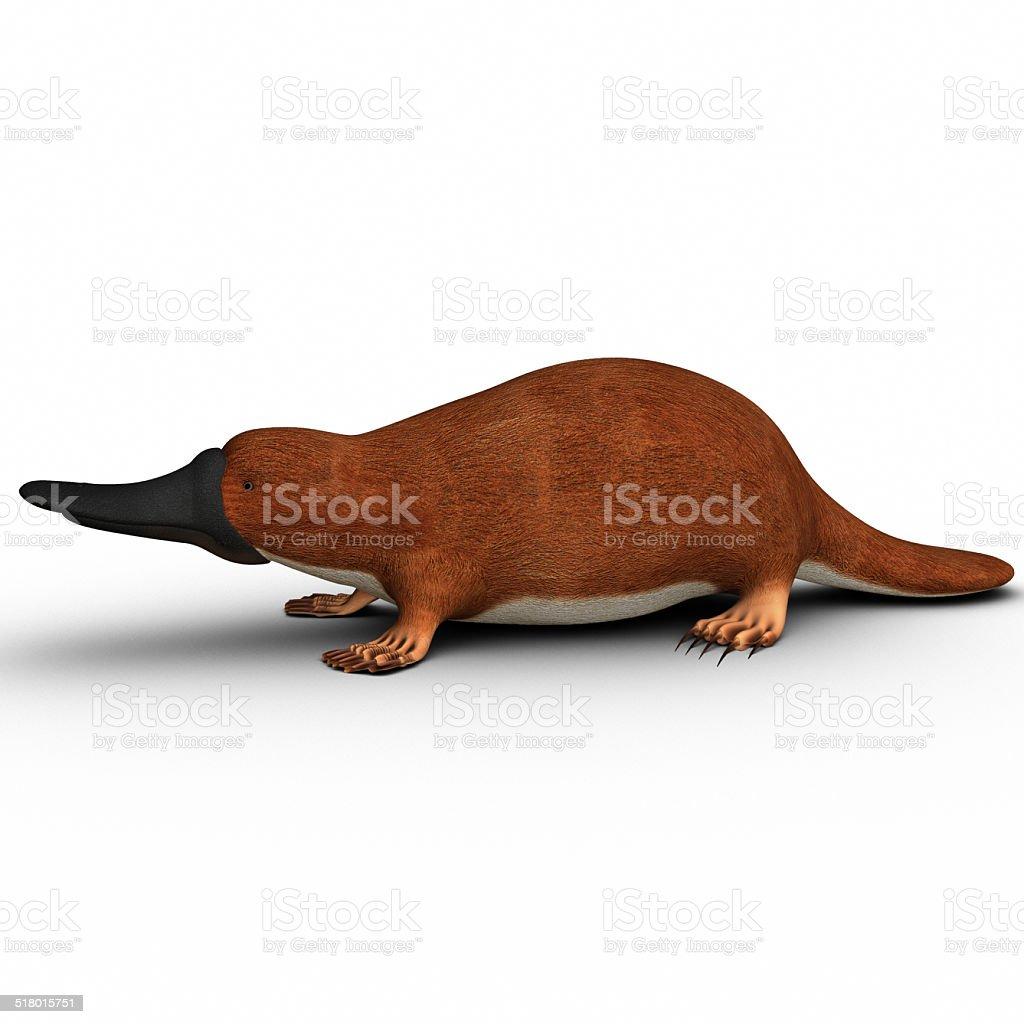Ornithorhynchus (Platypus) vector art illustration