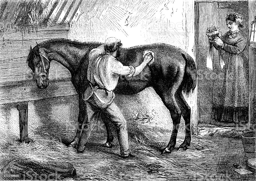 Ostler grooming horse in stable (Victorian illustration) royalty-free stock vector art