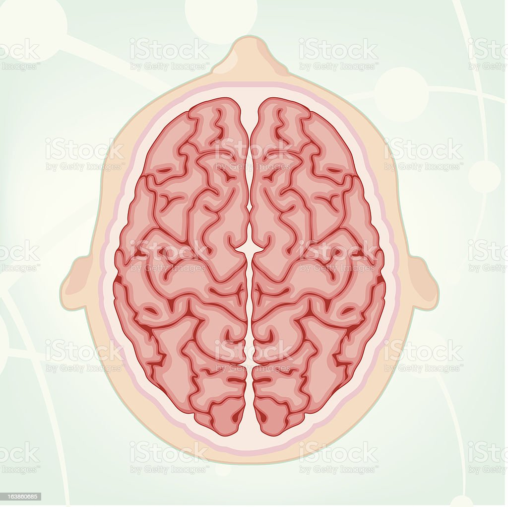 Overhead View of a Brain royalty-free stock vector art