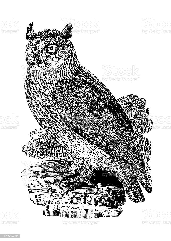 Owl Antique Print (Isolated on White) royalty-free stock vector art