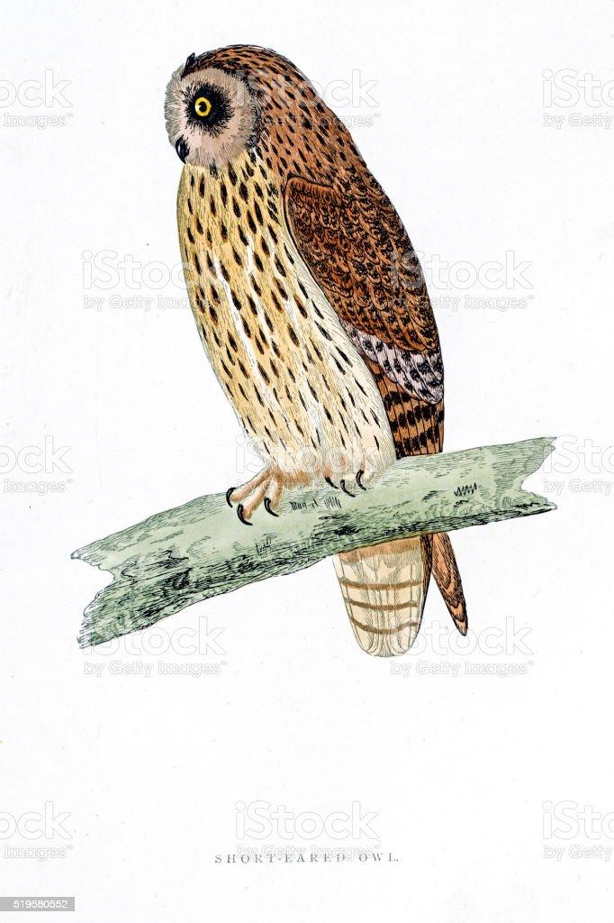 Owl bird 19 century illustration vector art illustration