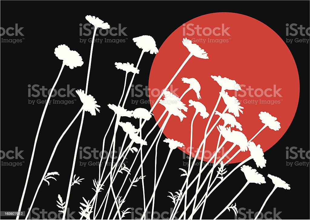 Ox-eye daisy silhouettes vector art illustration