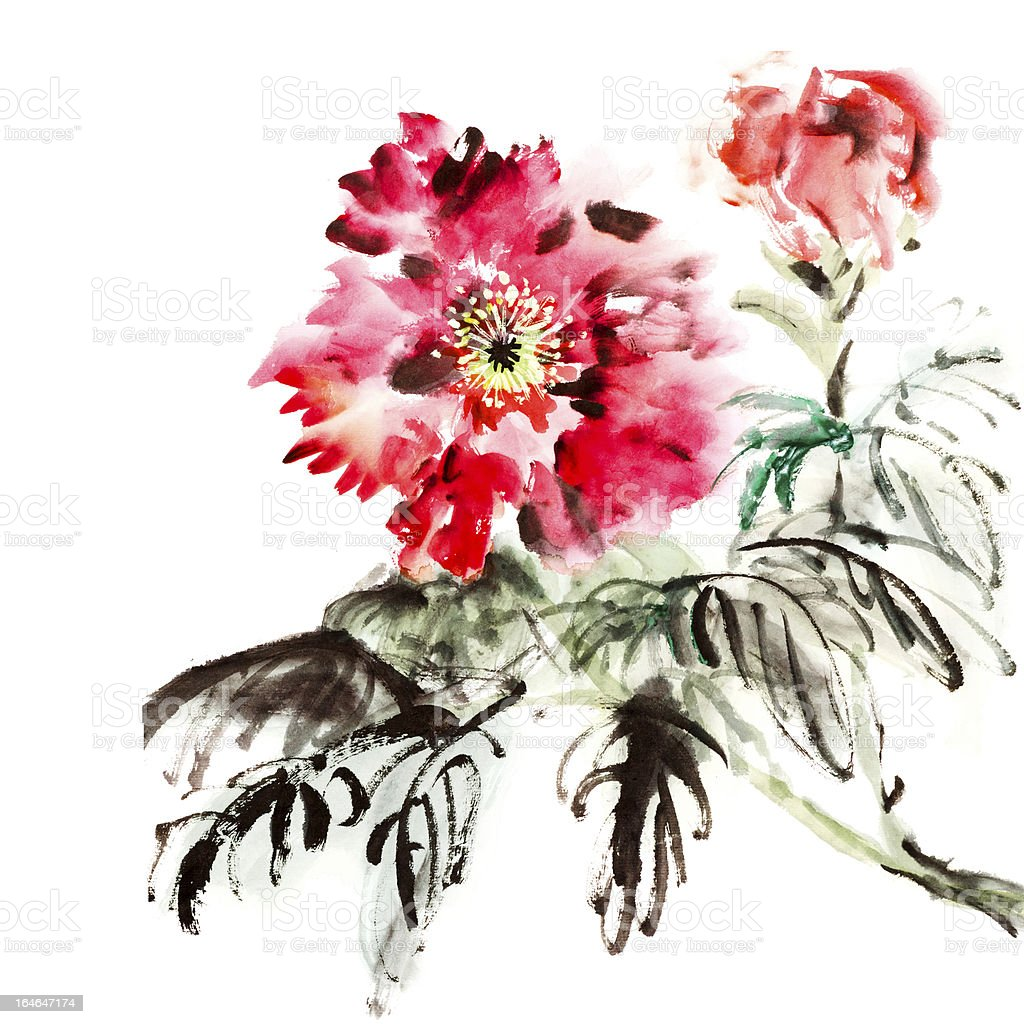 paeonia flowers royalty-free stock vector art