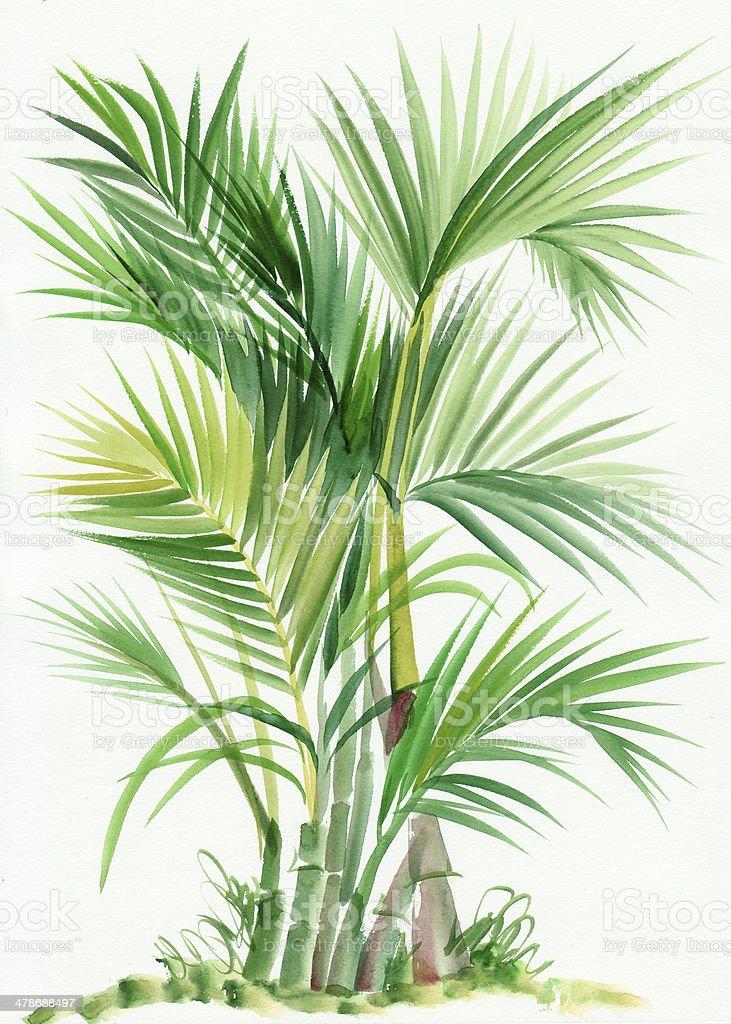 Palm bamboo tree vector art illustration