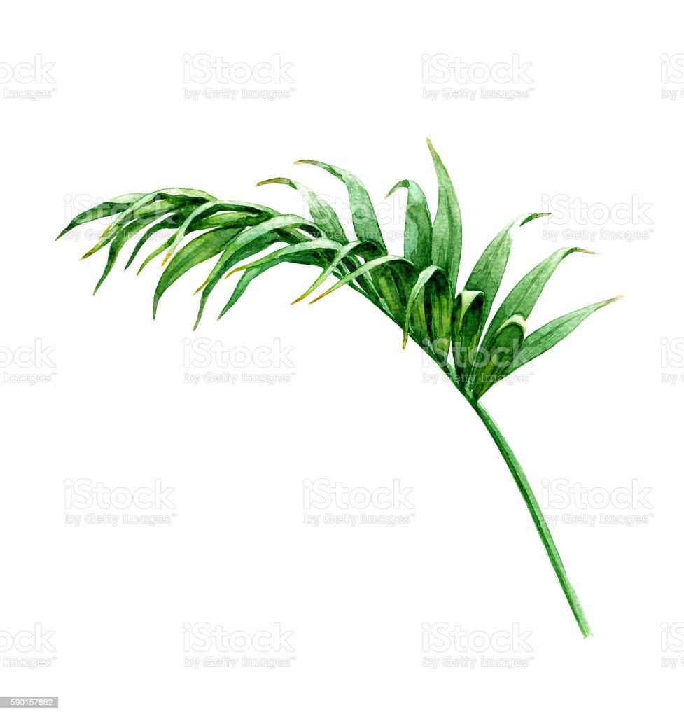 Palm leaf on White vector art illustration