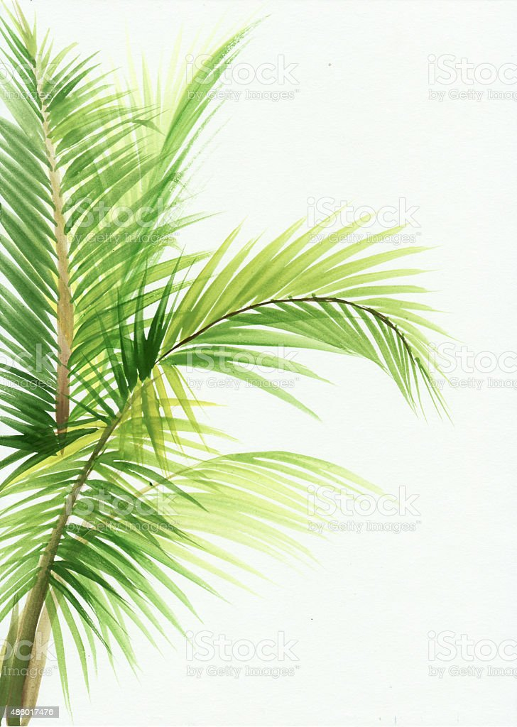 Palm leaves isolated vector art illustration