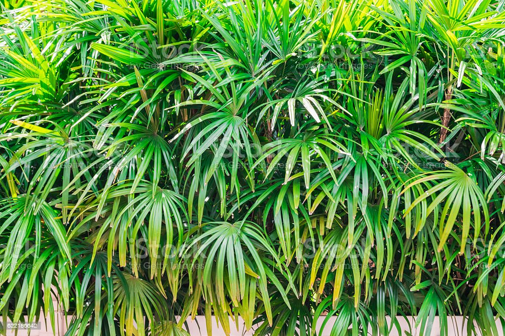 Palm leaves texture vector art illustration