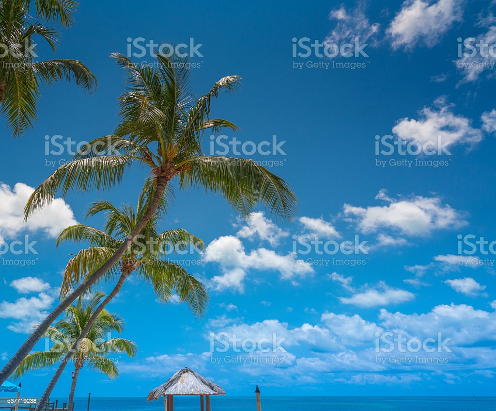 Palm trees in the florida keys vector art illustration