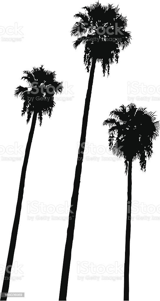 Palm Trio (Vector) royalty-free stock vector art