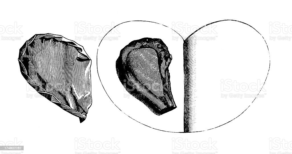 Paper-wrapped veal cutlet | Antique Culinary Illustrations vector art illustration