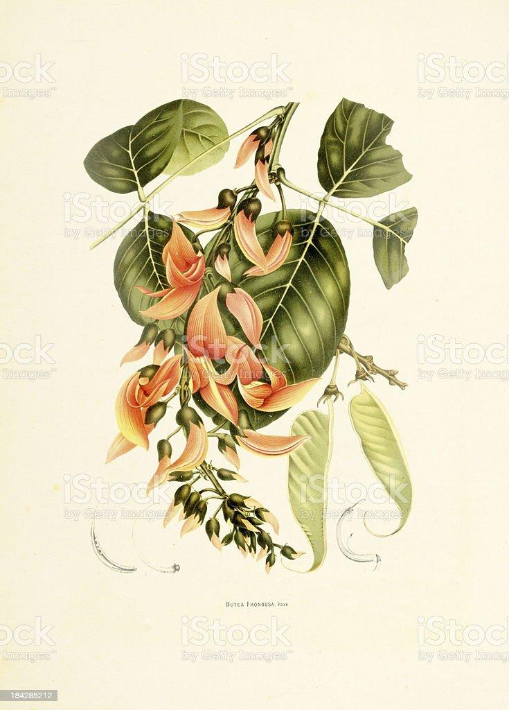 Parrot tree | Antique Plant Illustrations vector art illustration