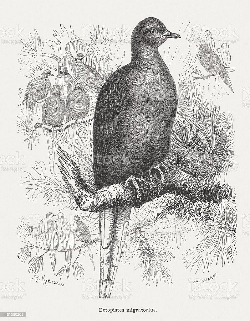 Passenger pigeon (Ectopistes migratorius), published in 1882 vector art illustration