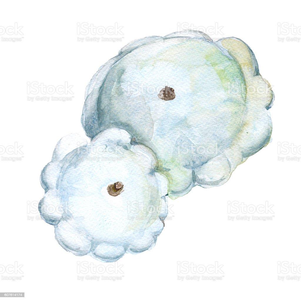 Patison. Cucurbita pepo. Isolated on a white background. Watercolor illustration. vector art illustration