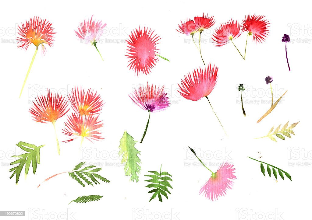 Pattern Mimosa Albizia julibrissin foliage and flowers vector art illustration