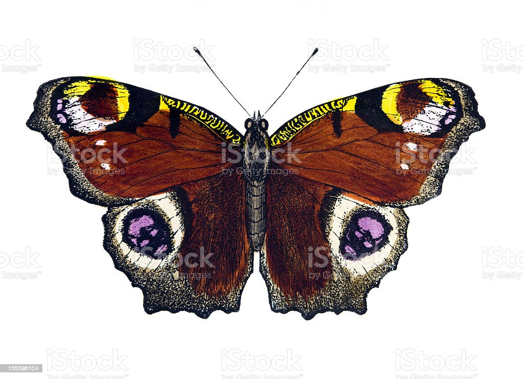 Peacock Butterfly royalty-free stock vector art