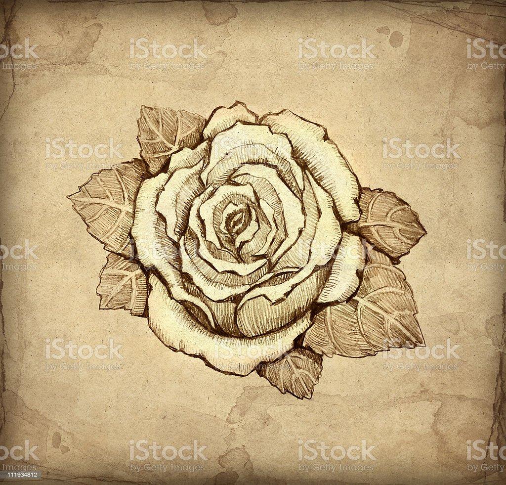 Pencil drawing of rose royalty-free stock vector art