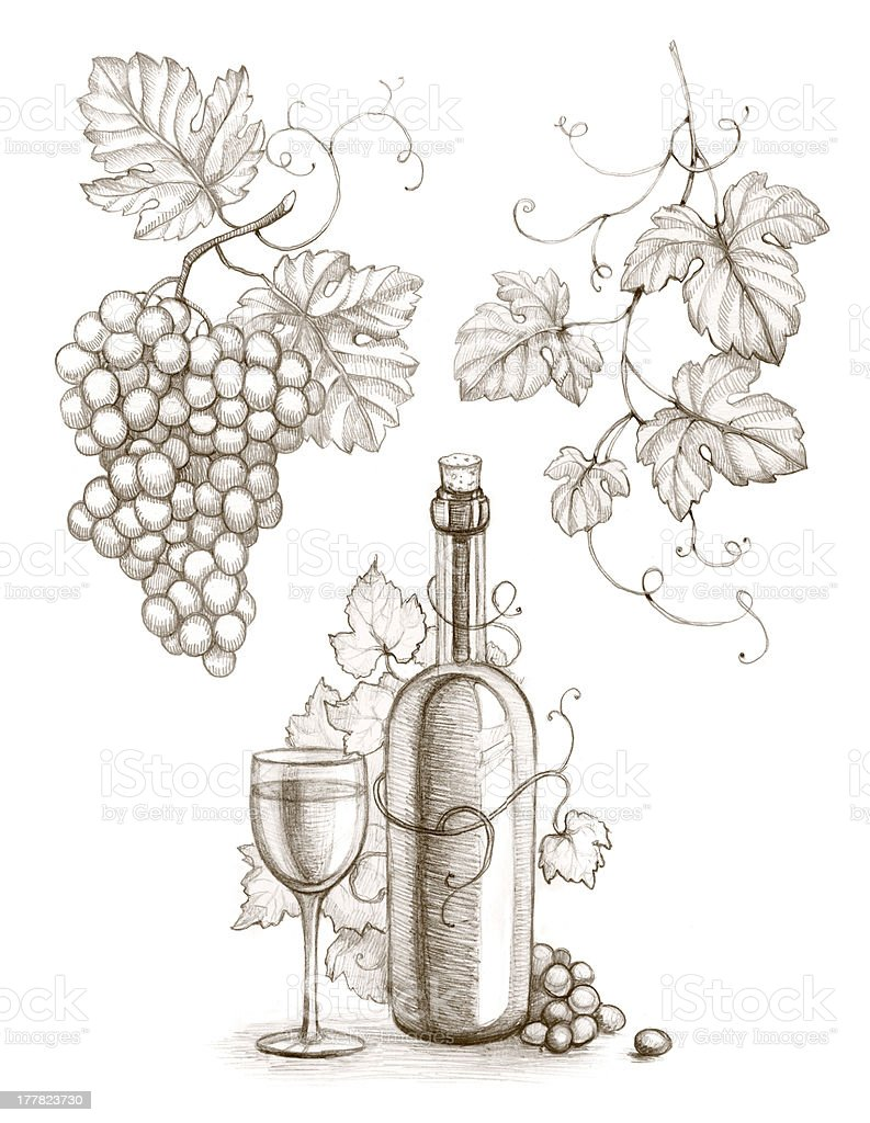Pencil drawing of wine bottle and grape royalty-free stock vector art