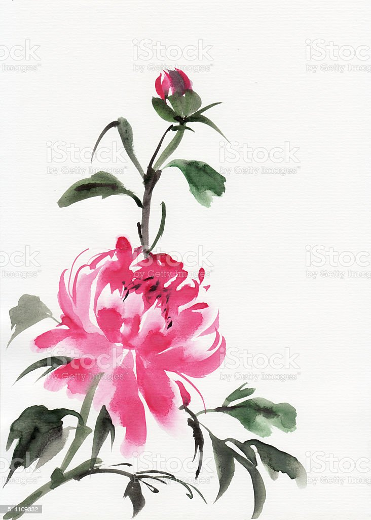 Peony flower vector art illustration