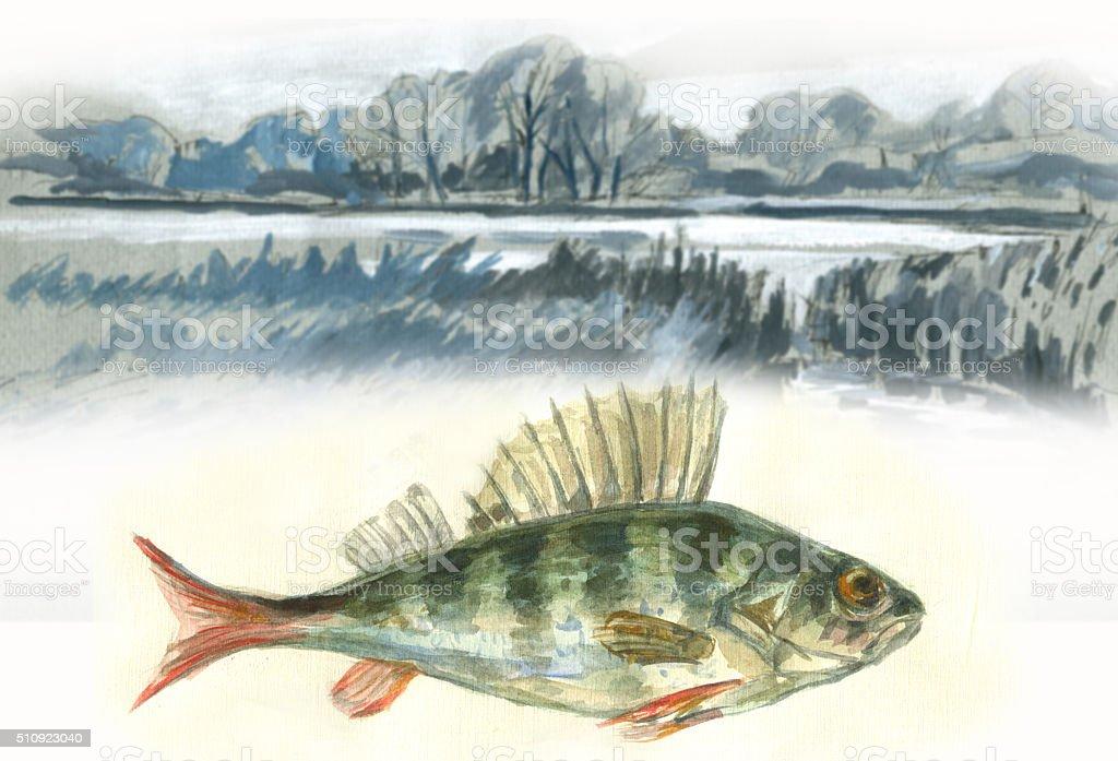 Perch fish and lake watercolor vector art illustration