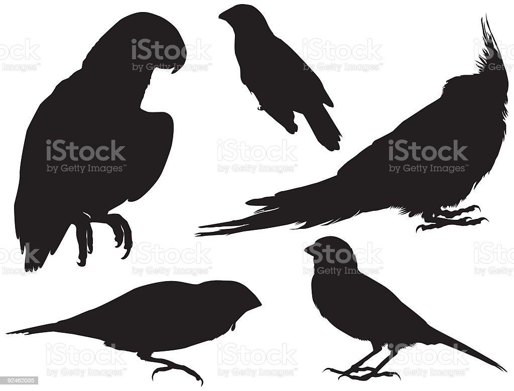 Pet Store Birds (Vector) royalty-free stock vector art