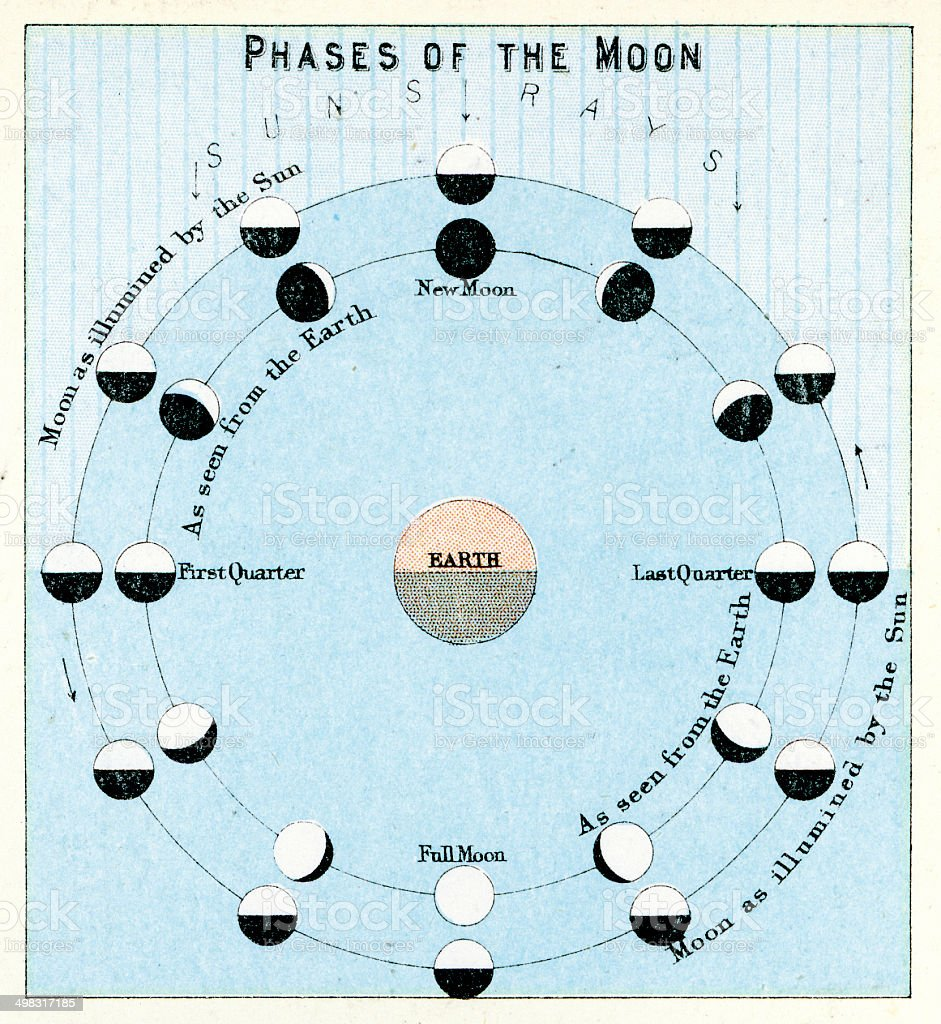 Phases of the Moon vector art illustration