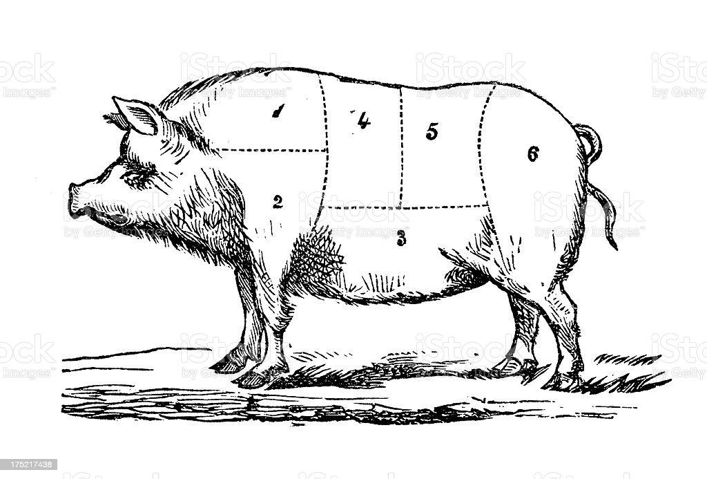 Pig Joints | Antique Gourmet Illustrations vector art illustration