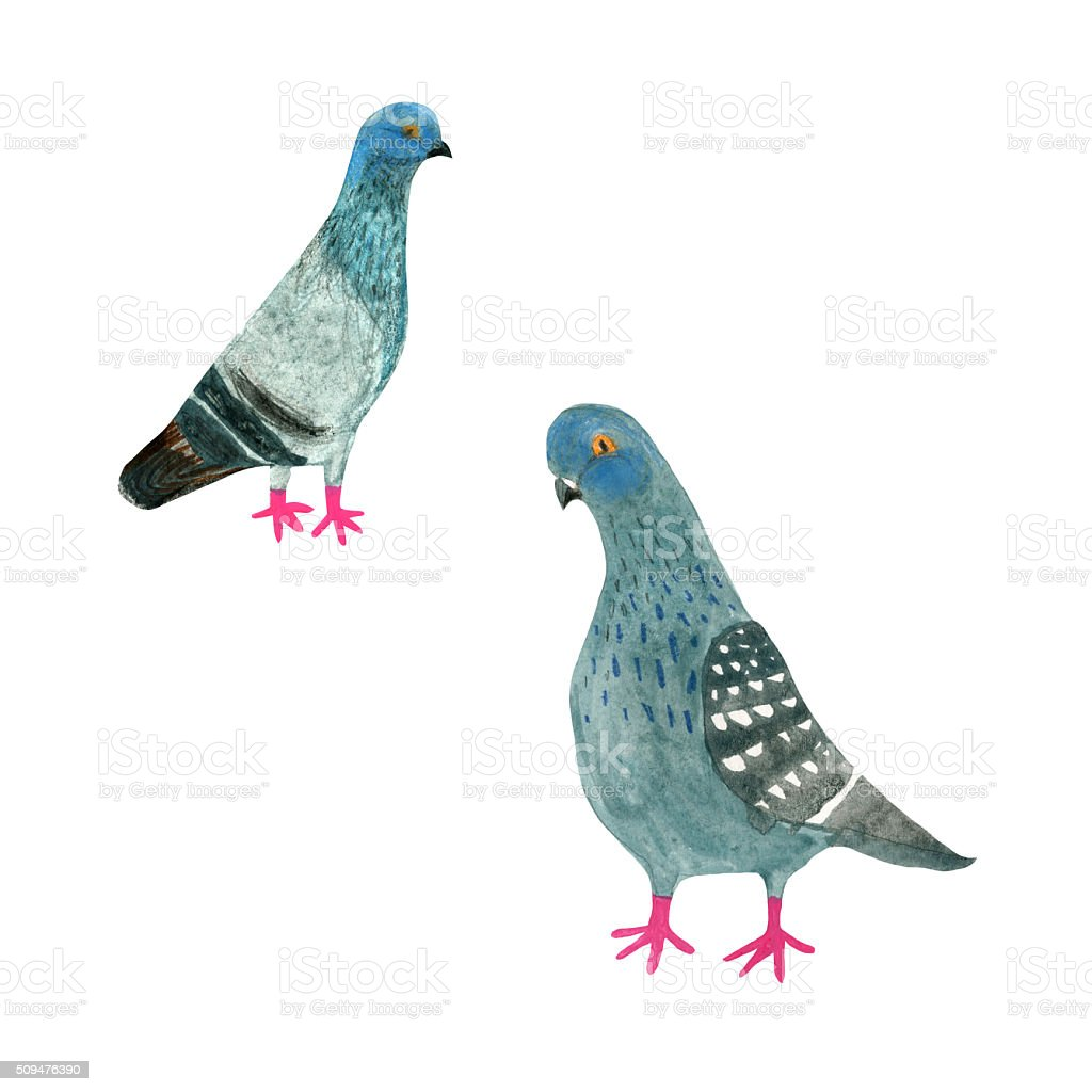 Pigeons vector art illustration