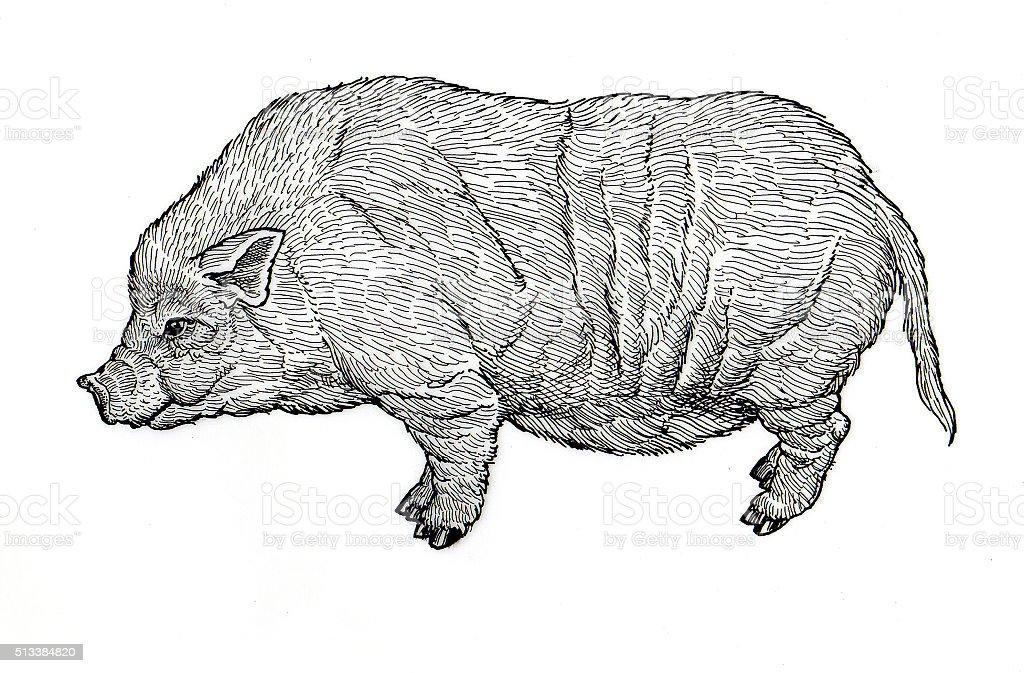 Pigmy Schwein Lizenzfreies vektor illustration