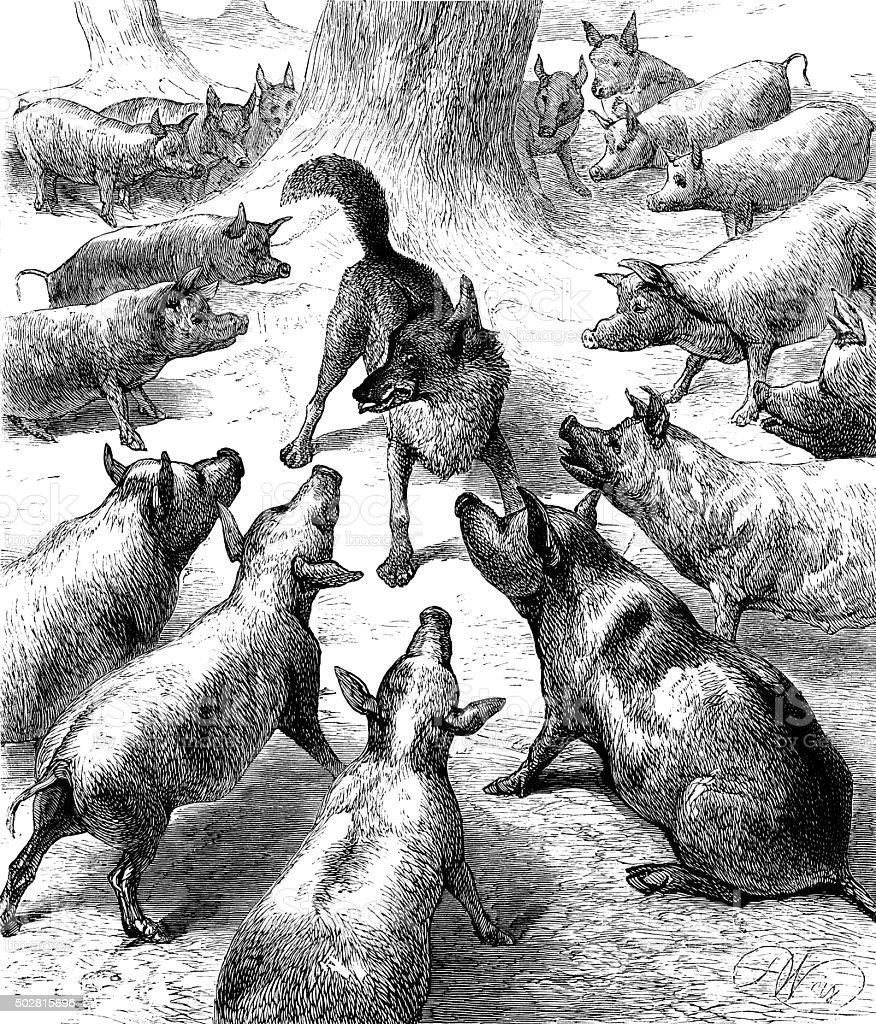 Pigs surrounding a wolf vector art illustration