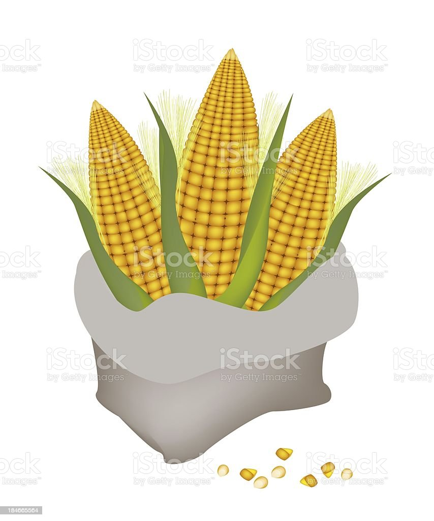 Pile of Fresh Corn in A Sack vector art illustration