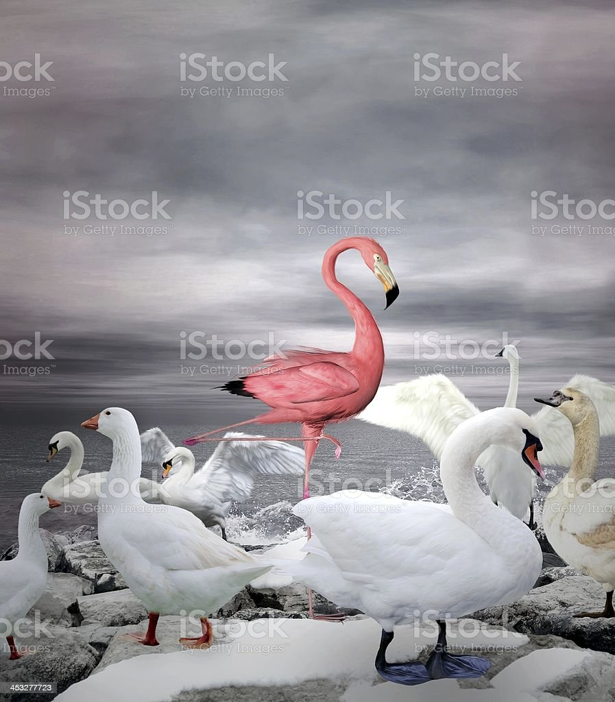 Pink flamingo among flock of white ducks and swans vector art illustration