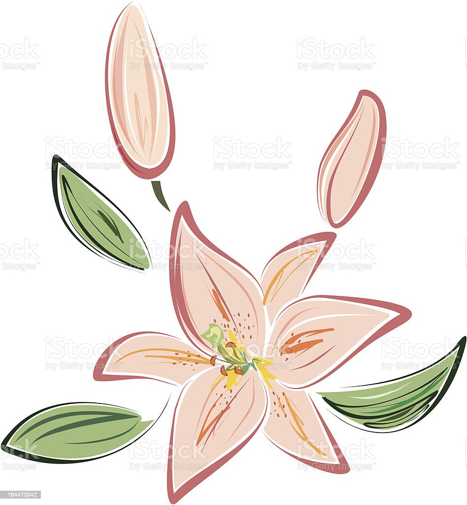 pink lily royalty-free stock vector art