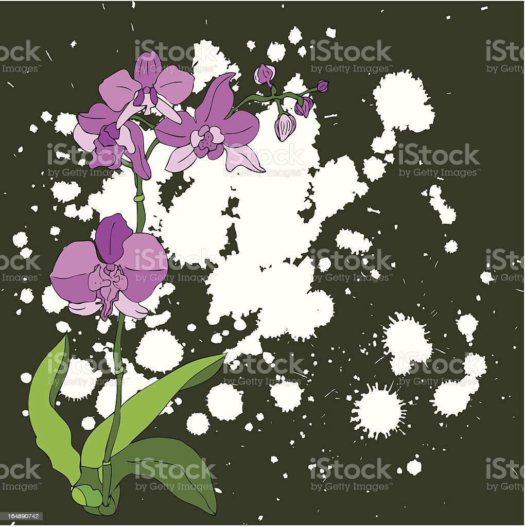 pink orchid illustration royalty-free stock vector art