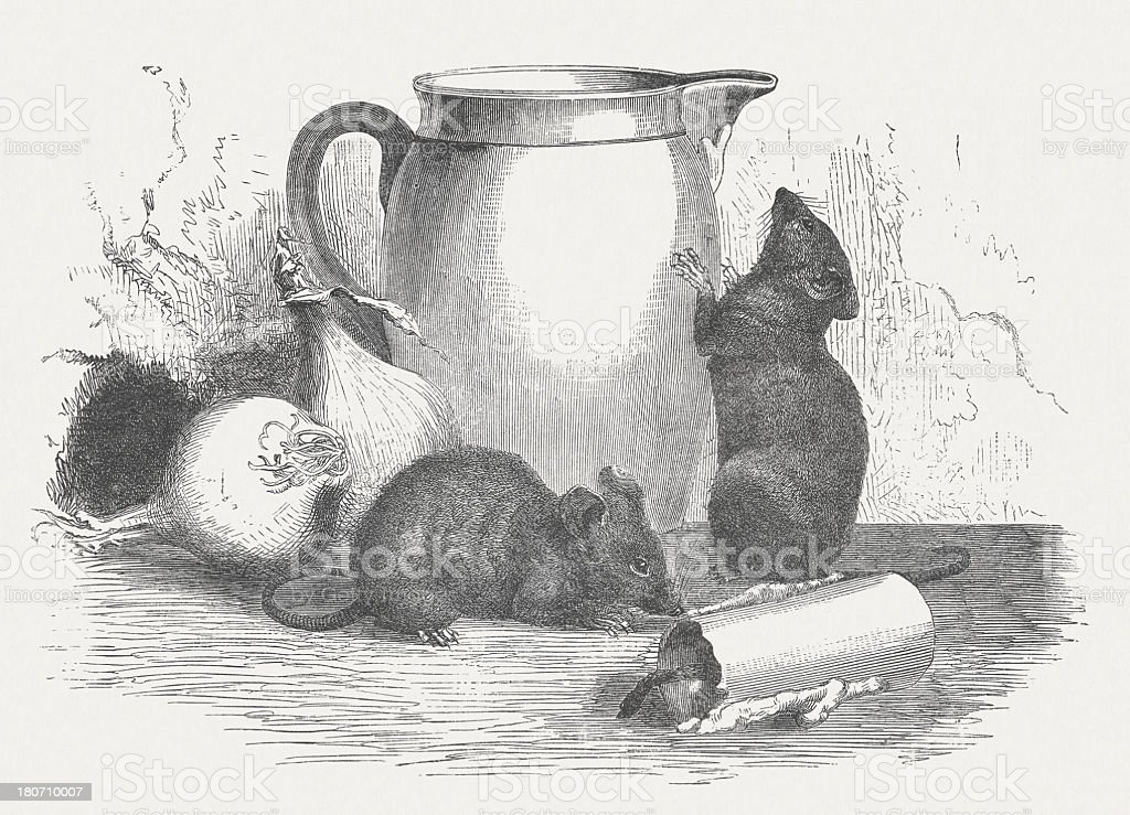 Plague of mice, wood engraving, published in 1875 royalty-free stock vector art