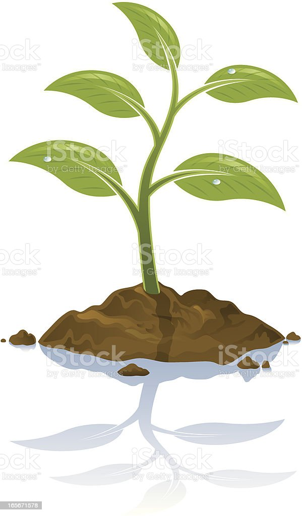 Plant royalty-free stock vector art