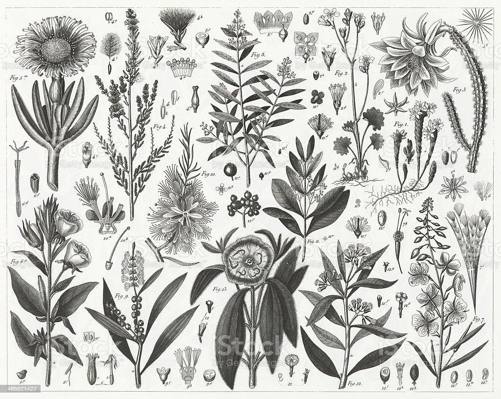 Plants Indigenous to Sandy & Rocky Soil vector art illustration