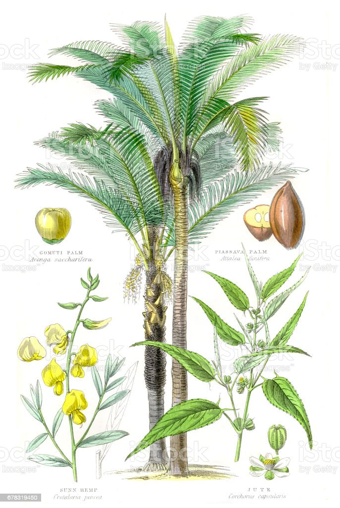 Plants used in clothing and cordage engraving 1857 vector art illustration