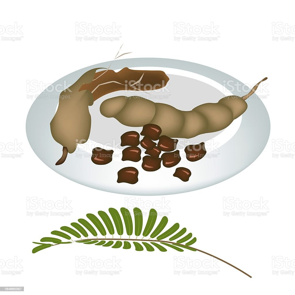 Plate of Fresh Tamarind Pod and Seed vector art illustration