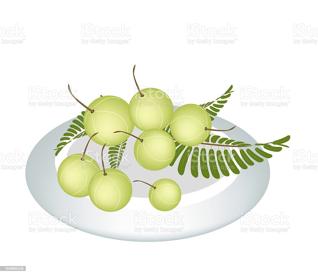 Plate of Indian Gooseberry on White Background royalty-free stock vector art