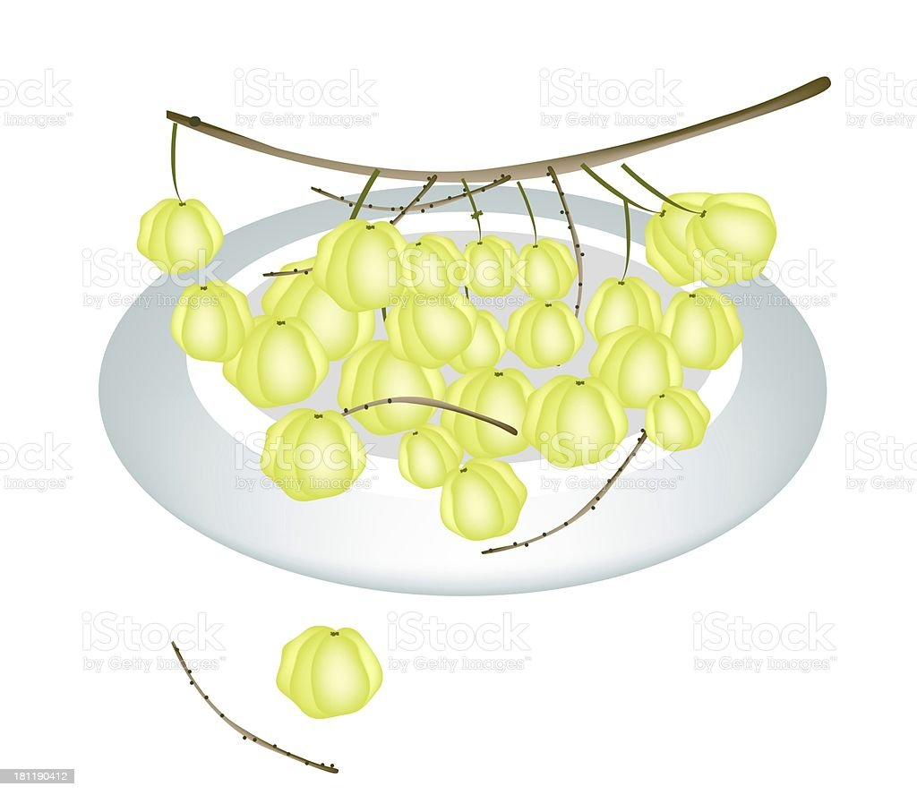 Plate of Star Gooseberry Isolated On White Background royalty-free stock vector art