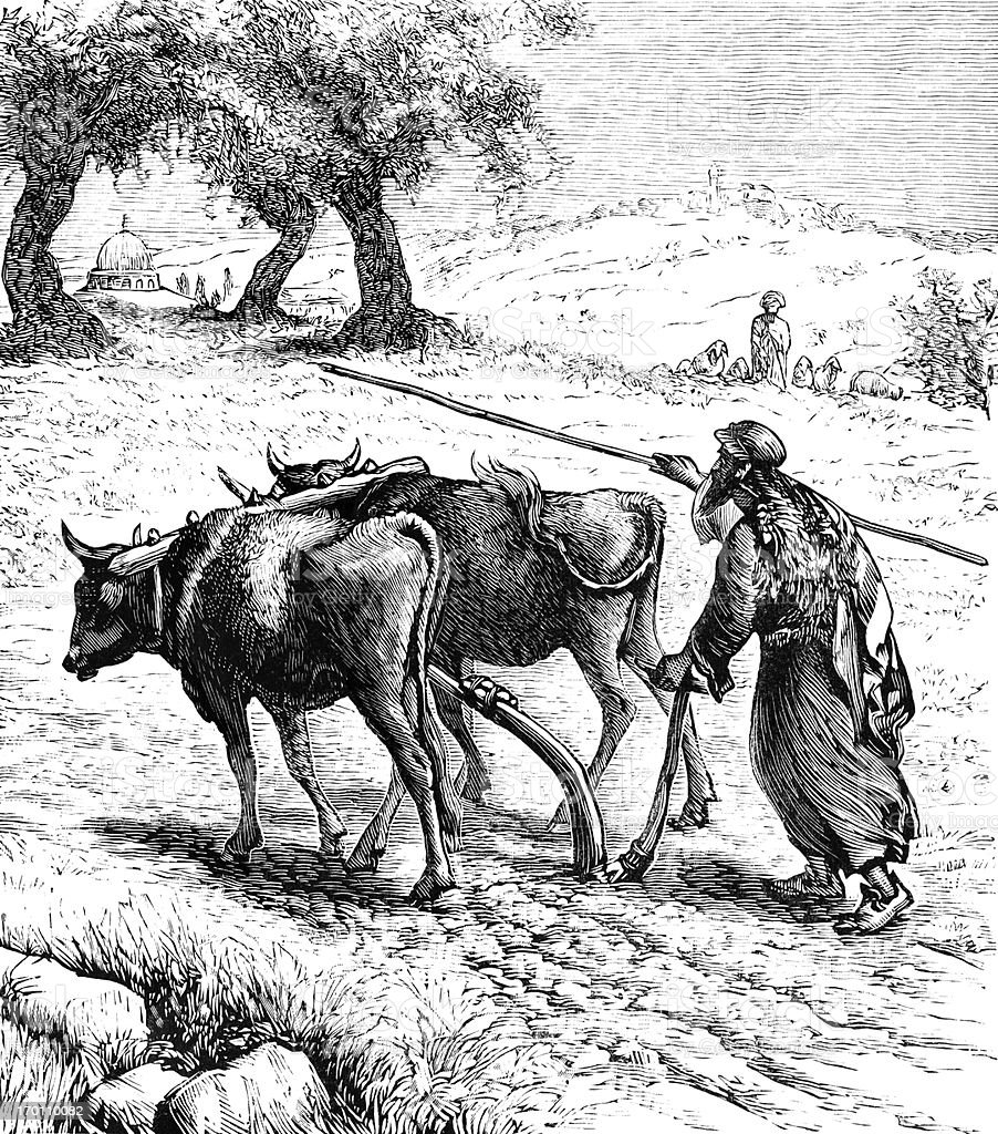 Ploughing in Palestine - Victorian engraving vector art illustration