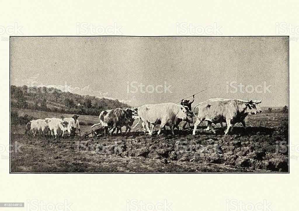 Ploughing in the Nivernais vector art illustration