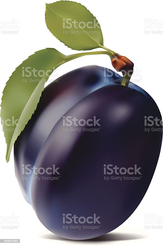 plum and leaves vector art illustration